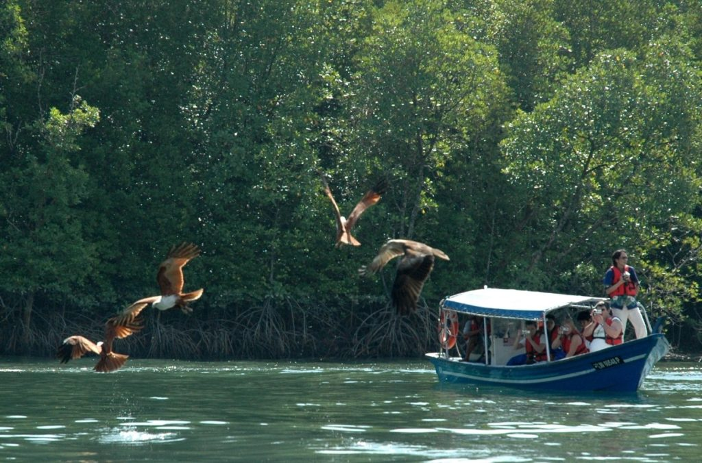 eagle-feeding-rebak-island